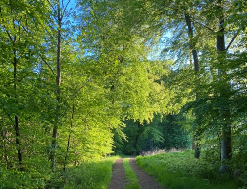 Shinrin-Yoku, oplev skoven på en ny måde